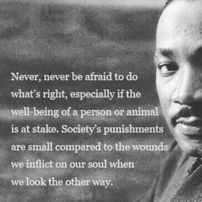 MLK quote dont look the other way
